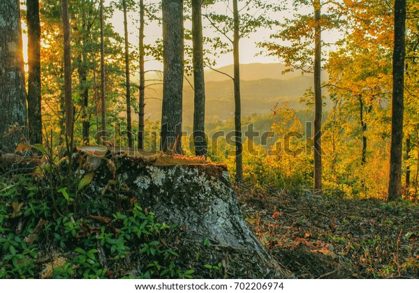 beautiful sunset in a forest with a big stump in the foreground
