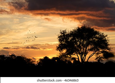 A beautiful sunset glow with trees that are backlit