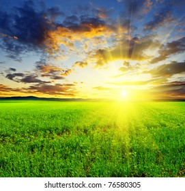 Beautiful sunset in green field.