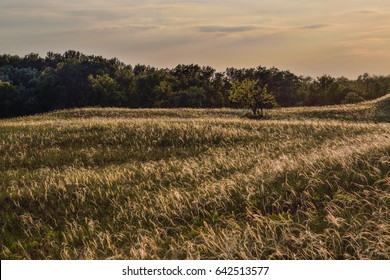 beautiful sunset landscape of feather grass meadow, needle grass, Stipa borysthenica,  hills, hungary,  natural park hungary, great hungarian plain, sunlit feather grass, wild grasses