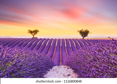 Beautiful sunset lavender field summer landscape near Valensole.Provence,France