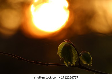 Beautiful sunset with a leaf
