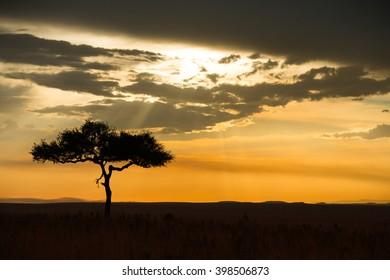 Beautiful sunset on the african savannah