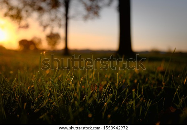 Beautiful sunset on a grassy meadow