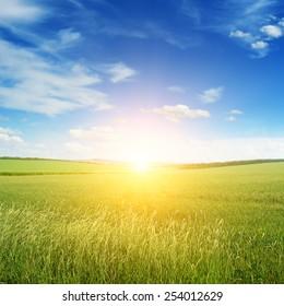 Beautiful sunset on green field