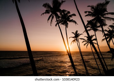 Beautiful sunset on the Sri Lanka beach