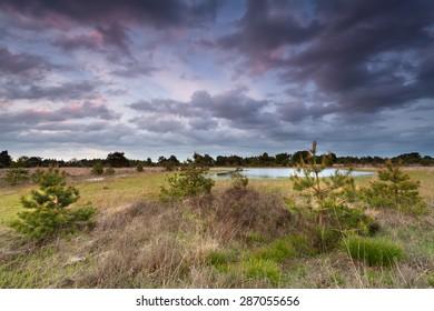 beautiful sunset over coniferous swamp, Netherlands