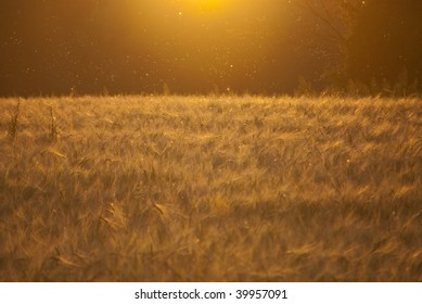 Beautiful sunset over field make all the insects glow