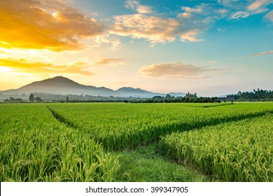 Beautiful sunset over the green fields at Phrao, Chiang Mai, Thailand.