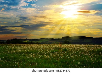 Beautiful sunset over the green large field.