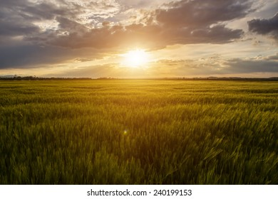 Beautiful sunset over the large green field