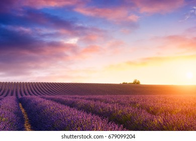 Beautiful sunset over the lavender fields in Valensole, France
