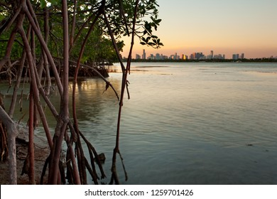 Beautiful sunset over Miami with mangrove forest and Biscayne Bay