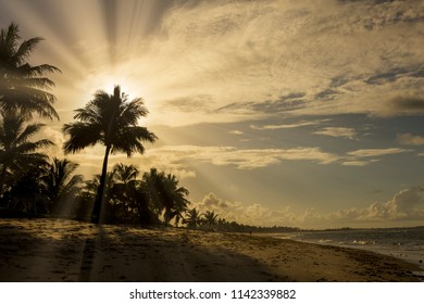 Beautiful sunset over the sea with a view at palms on the beach of Praia do forte, Bahia, Brazil