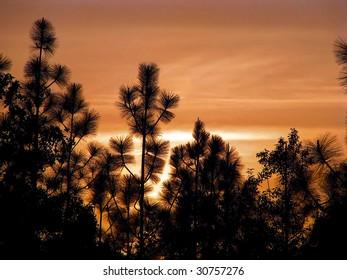 beautiful sunset over South Carolina pine trees