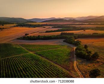 Beautiful Sunset over vineyard in Europe, aerial view