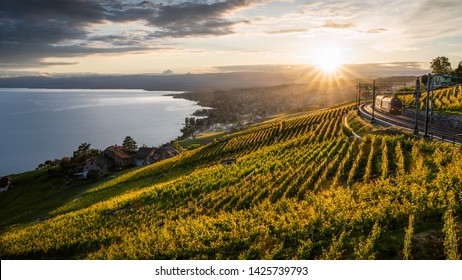 Beautiful sunset over the vineyard in Grandvaux in the neighborhood of Lausanne, Switzerland. This train is probably on of the most scenic in the world