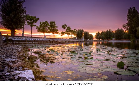 beautiful sunset over waterlilies on the lake