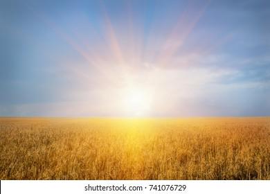 beautiful sunset over the wheat field