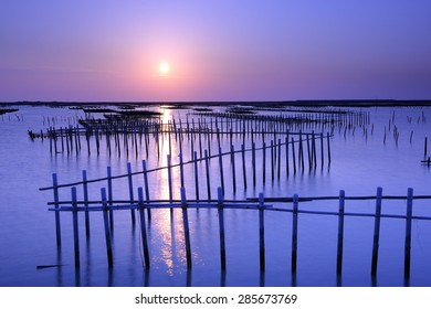 beautiful sunset in Oyster Farm
