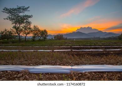 beautiful sunset at rice field
