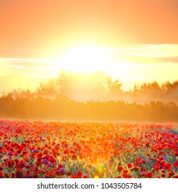 beautiful sunset scene, red poppy field on a sunset background