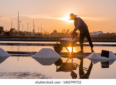 Beautiful sunset scene of salt field. Man farmer working on salt farm in Thailand. Man and the environment in process of salt making in Thailand.