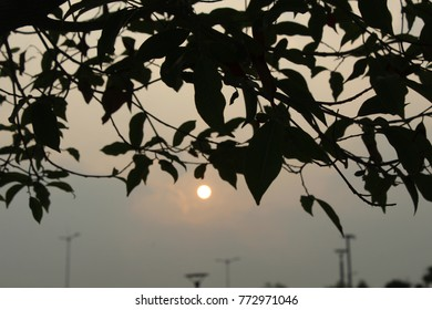 beautiful sunset and silhouette of  leaves