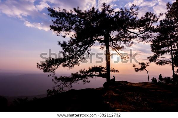 beautiful sunset with silhouette traveler and pine tree at Lom Sak cliff, Phu Kradung National Park, Thailand