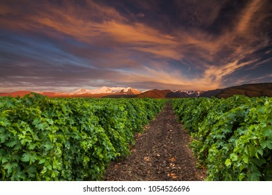 Beautiful sunset sky over a vineyard in the mountains.