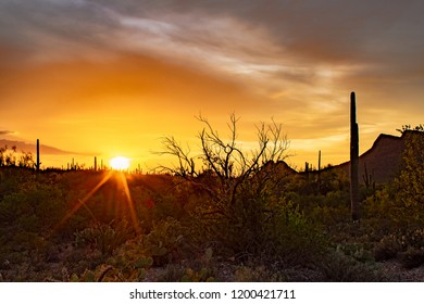A beautiful sunset in the Sonoran desert west of Tucson, Arizona in Saguaro National Park. Brittle bush, ocotillo, prickly pear, cholla and other cacti dot the landscape. Pima County, summer of 2018.
