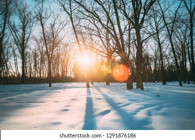 Beautiful Sunset Sunrise Sun Sunshine In Sunny Winter Snowy Forest Park. Sunlight Through Woods In Winter Forest Landscape. Shadows On Snow.