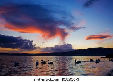 Beautiful sunset with swans silhouettes on Bracciano Lake, at Trevignano Romano, Lazio, Italy.