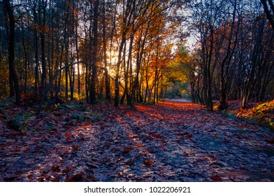 Beautiful sunset through leaves of trees in autumn forest Mastbos