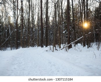 Beautiful sunset through naked trees in forest at winter in deep snow in Norway