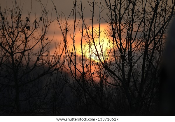Beautiful sunset through tree branches