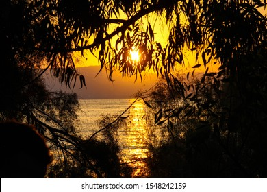 beautiful sunset through the trees at the sea of galilee (the kinneret).