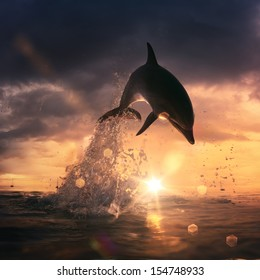 Beautiful Sunset time at the sea and playful dolphin leaping water with splashes