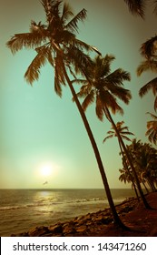 Beautiful sunset at tropical beach with palm trees. Ocean landscape in vintage style. India