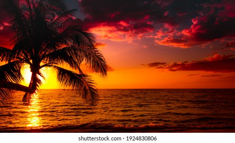Beautiful sunset tropical beach with palm tree and pink sky for travel and vacation in holiday relax time