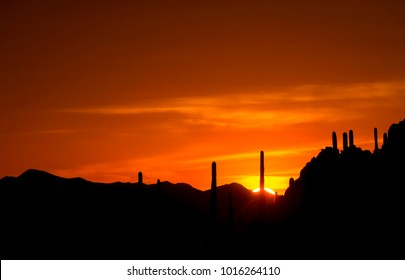 A beautiful sunset in Tuscon creates a setting for silhouttes of ssgurao cacti. against the setting sun. The location is overlooking Saguaro National Park in Arizona.