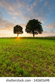 beautiful sunset with two trees. landscape