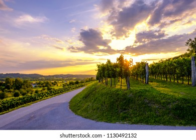 Beautiful sunset at vineyards of Vipava valley, Slovenia. Famous wine making region