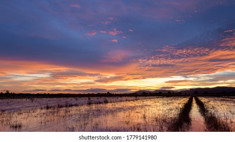 Beautiful sunset in the wetlands near the town of La Llosa, in the province of Castellón. Valencian Community. Spain. Europe