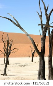Beautiful and surreal shapes formed by the 1000 year old trees of Dead Vlei, Namibia