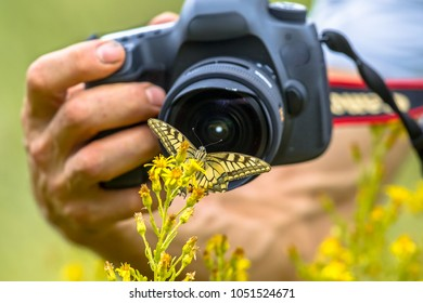 Beautiful Swallowtail butterfly on yellow flower photography by wildlife photographer from short distance