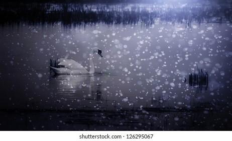 Beautiful swan in snowfall at the lake.