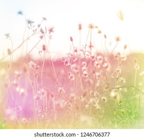 Beautiful sweet flower in soft focus style for flora background. Pastel color tone