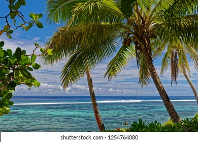 A beautiful swimming beach in Tonga with coconut trees at the edge