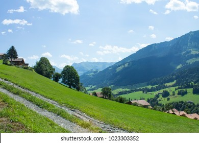 Beautiful swiss alps in the foreround grass with clover